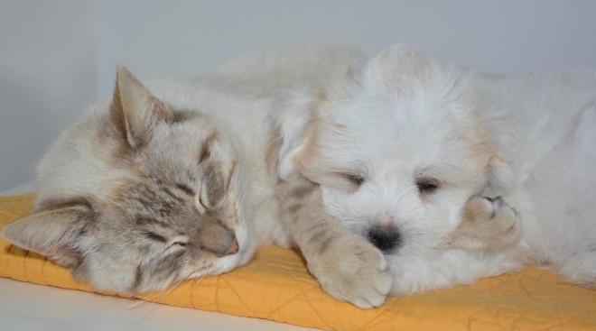 kedi köpek apartman kanunu