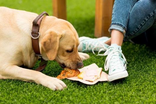 köpek beslenmesi