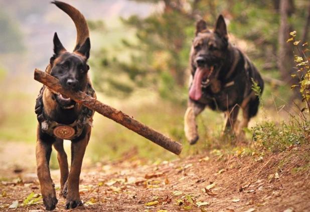 köpeklerin genel özellikleri