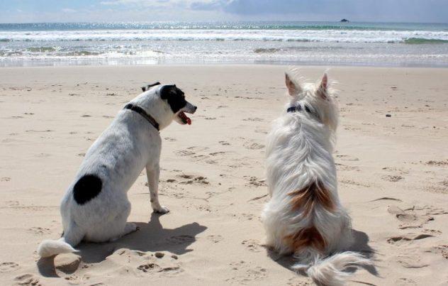 köpek ile seyahat