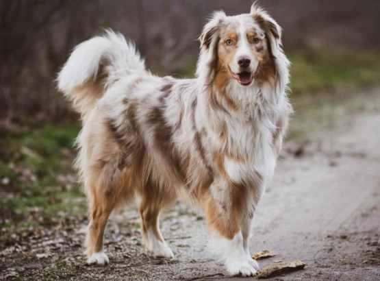 Dişi ve erkek köpek arasındaki farklar