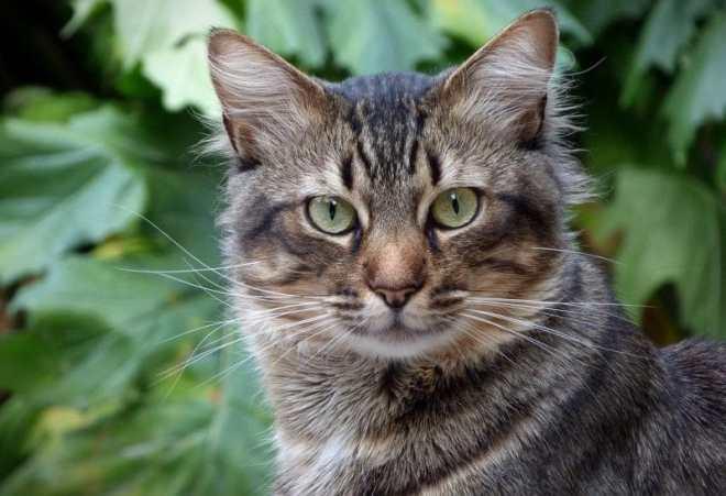 kedilerde kabızlık nedenleri ve önlemi