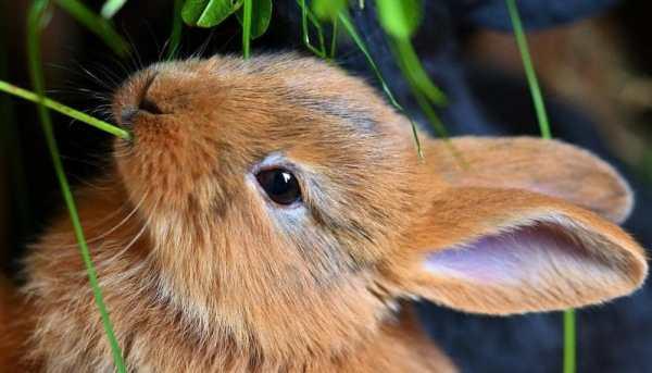 bir tavşanı nasıl eğitirsiniz
