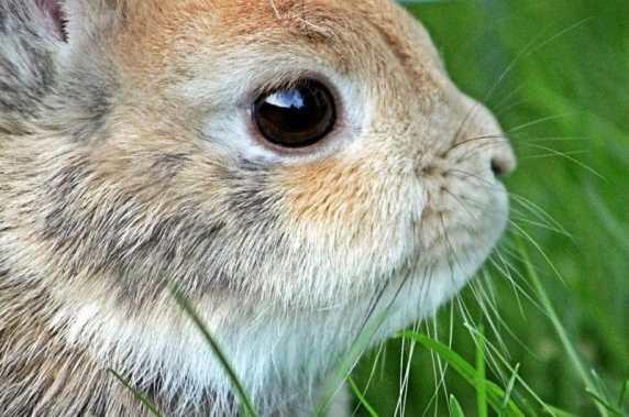tavşan eğitimi