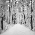 About creating art and fine art photography - White Veil © Julia Anna Gospodarou
