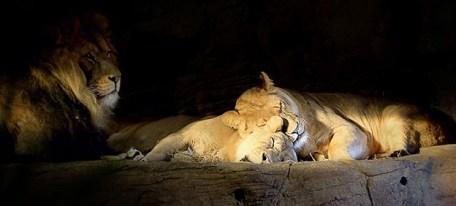 Lion-Rock-Image_Credit_Samantha_Annis