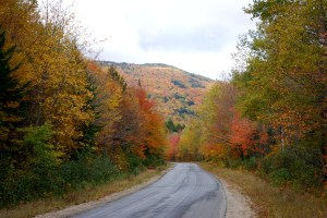 A final look at the leaves of autumn.  Nathaniel Hammond photograph.