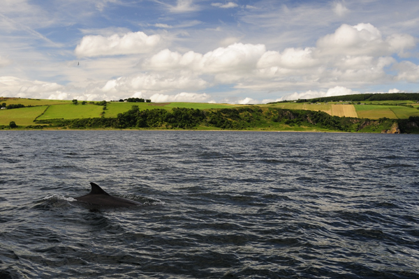 Bottlenose Dolphin and Rosemarkie - Eathie Coastline, the Black Isle