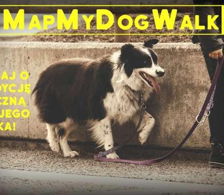 pies na spacerze