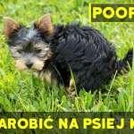 Pooper App