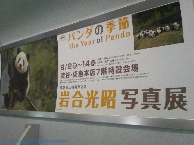 パンダの季節 2007