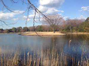 昭和纪念公园的湖水