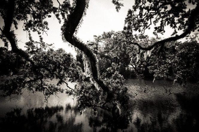 KellyWilliamsPhotographer_NewOrleans_ParkOverlay-6