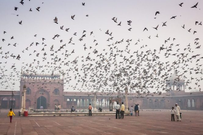 People in the courtyard of the Jama Masjid in Delhi