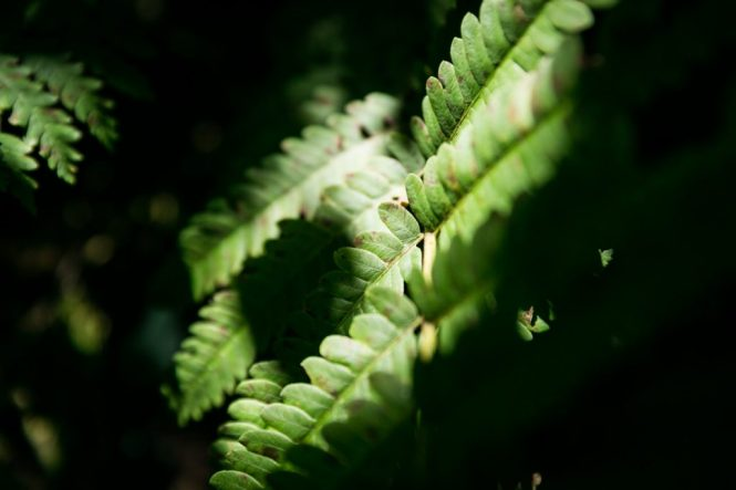 Fern by North Carolina photographer, Kelly Williams