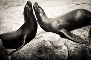 Two seals for an article on Bronx Zoo photo tips