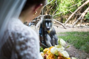 Bride and groom portraits for a Bronx Zoo wedding