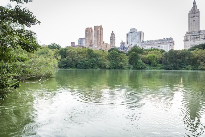 Ripples in Central Park lake for an article entitled, 'Do you need a permit to get married in Central Park?'