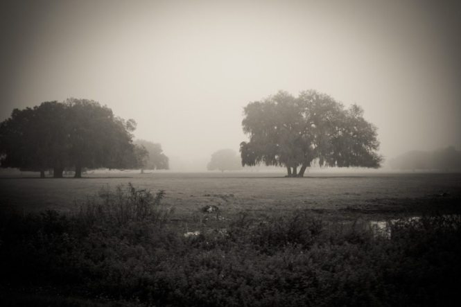 Trees shrouded in fog
