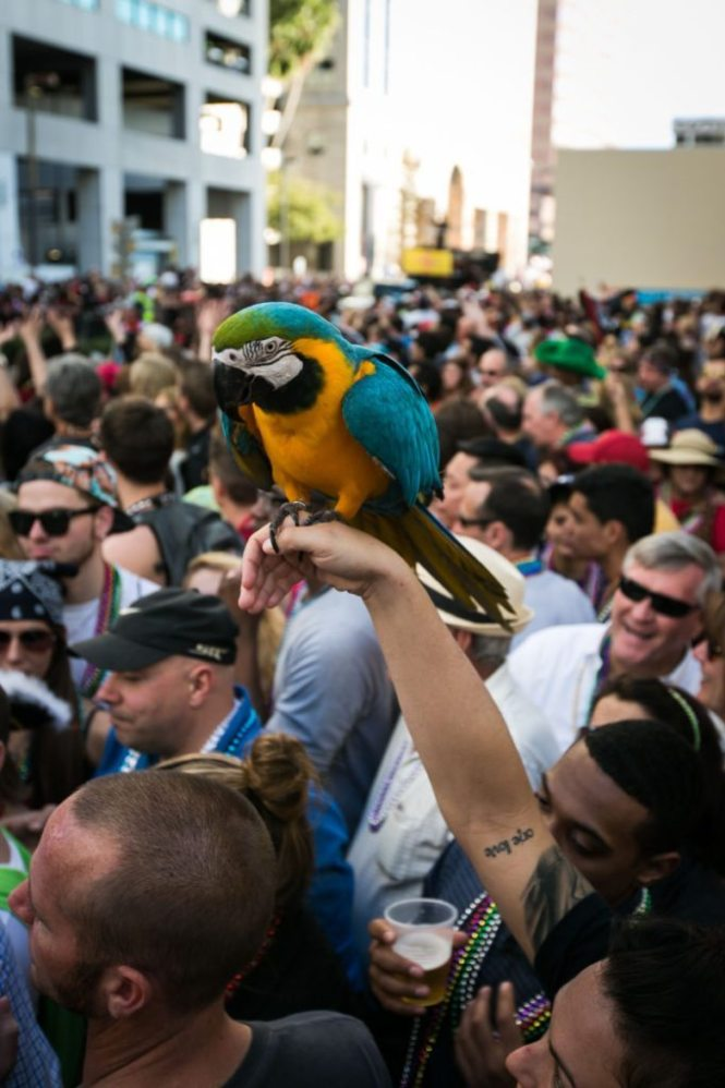 A parrot at a pirate parade, of course, by NYC photojouralist, Kelly Williams