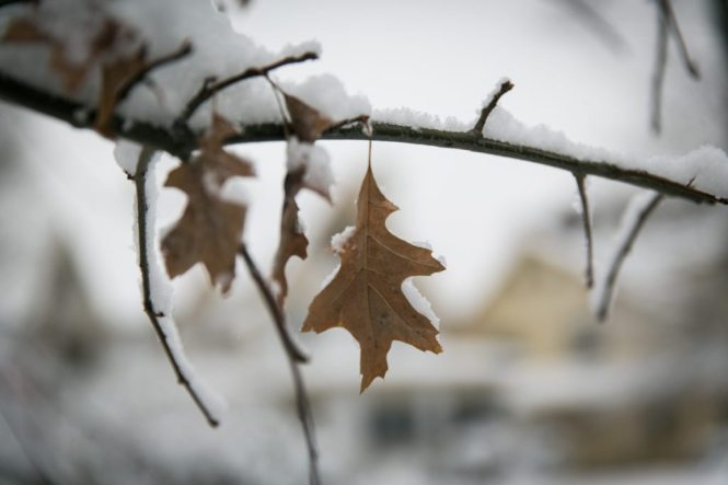 NYC snow photos by photojournalist, Kelly Williams