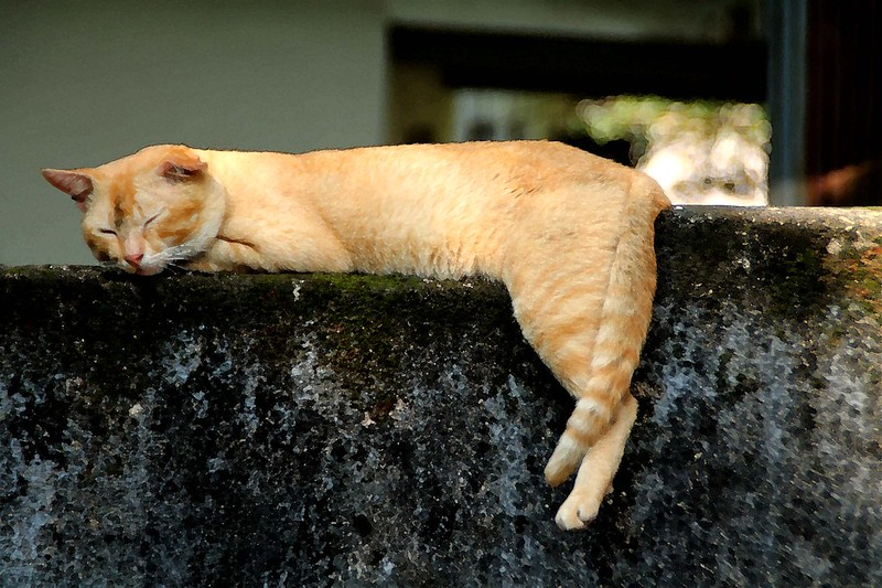 A ginger cat resting on a wall.