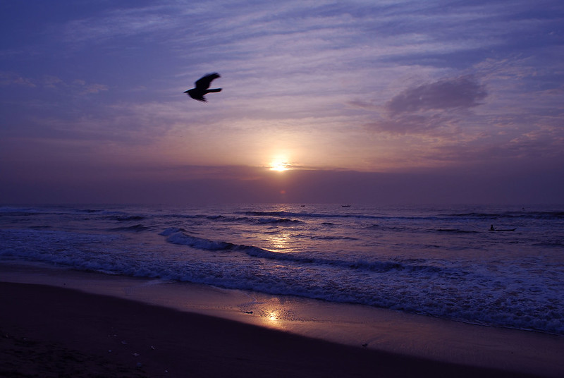 An early bird flying across the sky with a sunrise in the background in a beach scene.