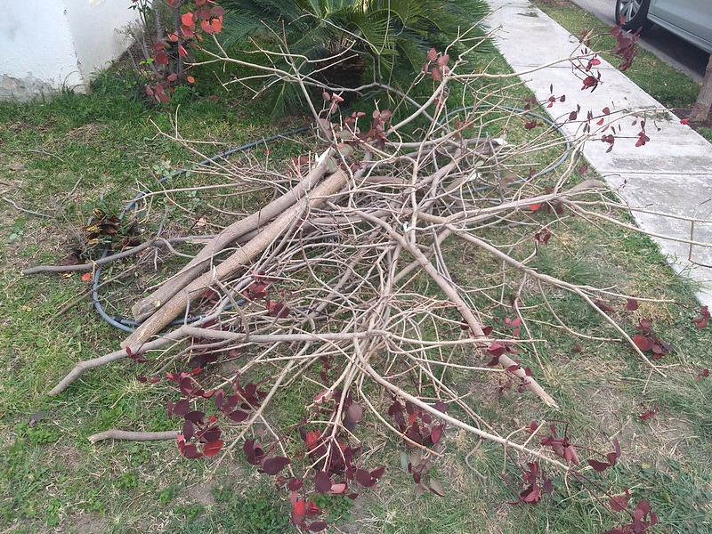 Cut tree branches on the lawn waiting to be recycled.