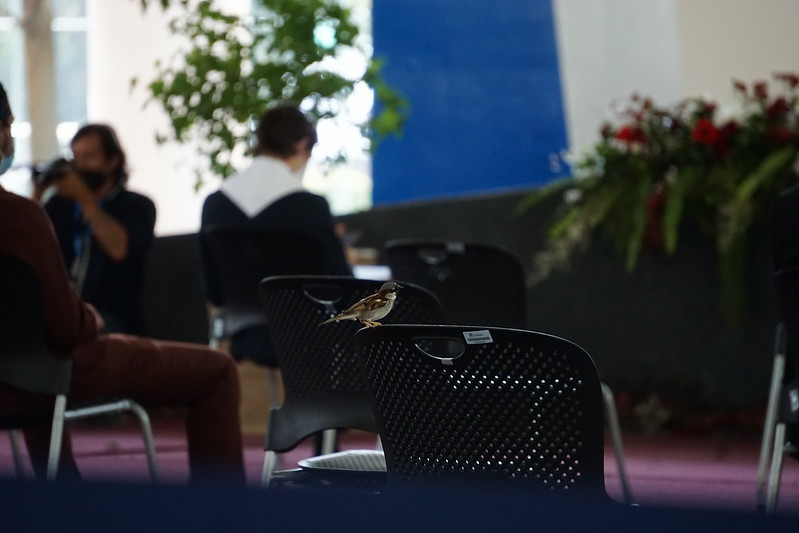 I caught this bird resting on one of the empty chairs at PrepaTec 2020 graduation in Guadalajara on June 9, 2021.