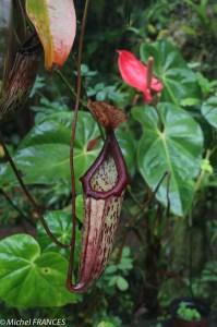 Une plante carnivore