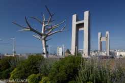 L'arbre emphatique est une oeuvre d'art arrivée avec le tramway ...