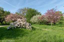 arboretum du Bois de Vincennes, école du Breuil