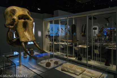 Musée des confluences - Carnets de collections