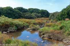 Au fond de l'Aber-Idult à Pont-Reun