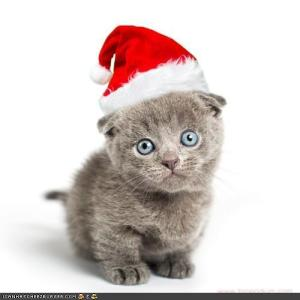 Cute Santa Kitteh