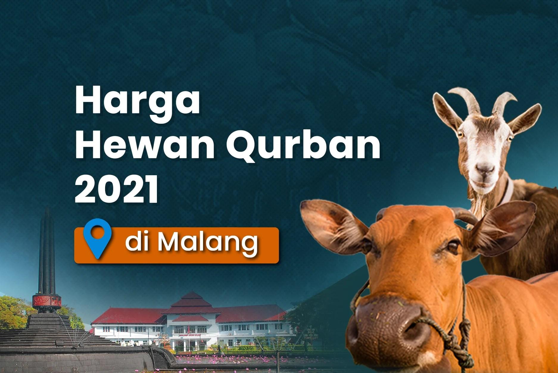 Di bawah ini adalah harga standar sapi qurban di wilayah purwakarta,. Harga Hewan Qurban 2021 di Malang   Kitabisa.com