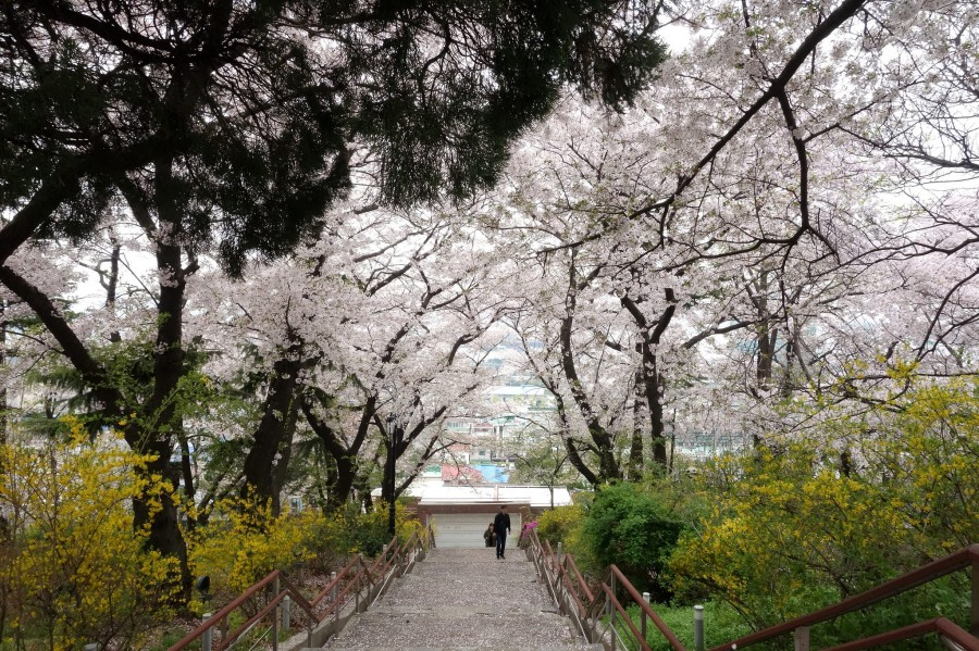 Korea Incheon Jayu Park 仁川自由公園 CVisualHunt Free For Commercial Use FFC on VisualHunt CC BY 39449006861 1cde1148e6 k