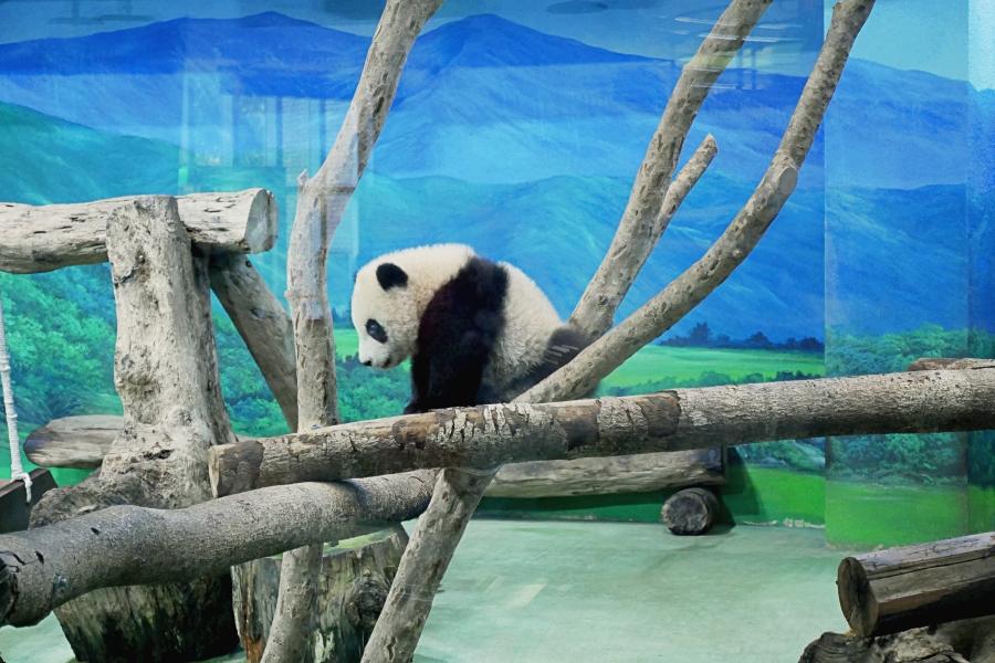 木柵動物園/台北動物園/大貓熊館/熊貓