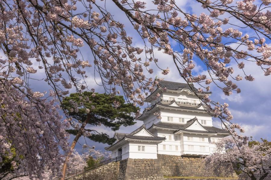 batch Japan tokyo odawara sakura AShutterstock  622947044