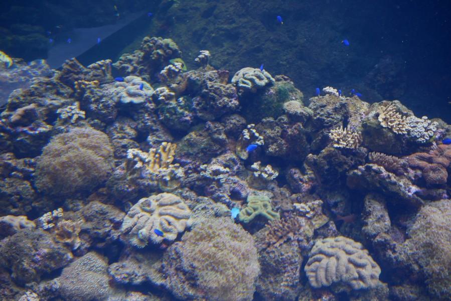 Xpark_珊瑚潛行區