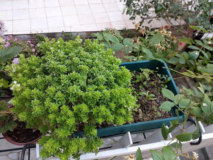 Evde nasıl sebze yetiştirilir