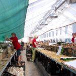 Tausende Tütchen mit Zwiebeln werden gepackt
