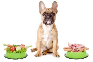Elimination diet for dogs
