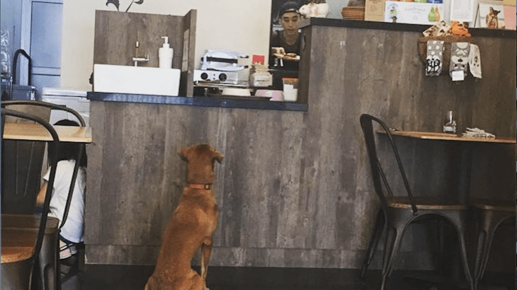 dog cafes in singapore