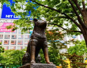 history of dogs hachiko statue