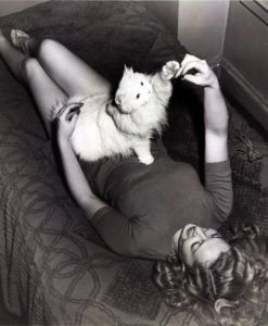persian cat marilyn monroe mitsou