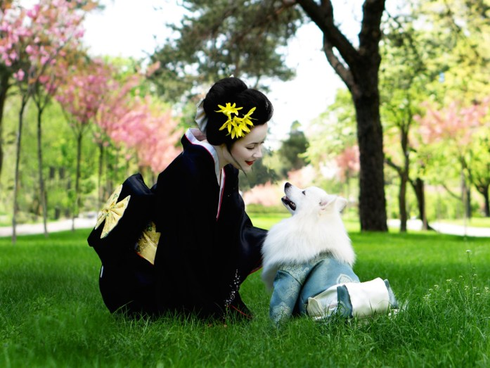 japanese spitz dog breed with japanese woman