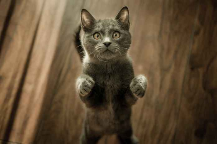 cat standing on two legs