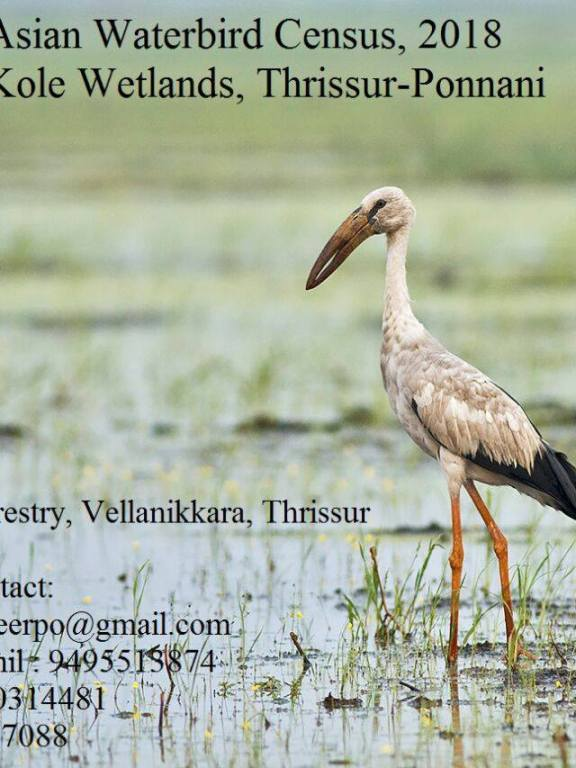 Asian Water Bird Census 2018 Announcement