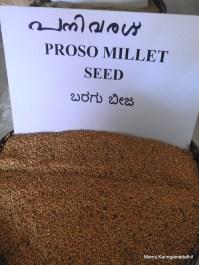 പനിവരഗ് (Proso Millet) വിത്ത്